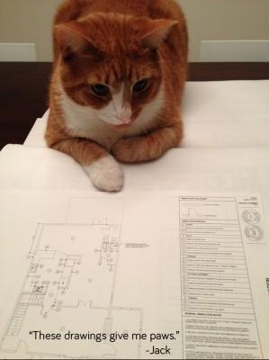 jack-the-cat